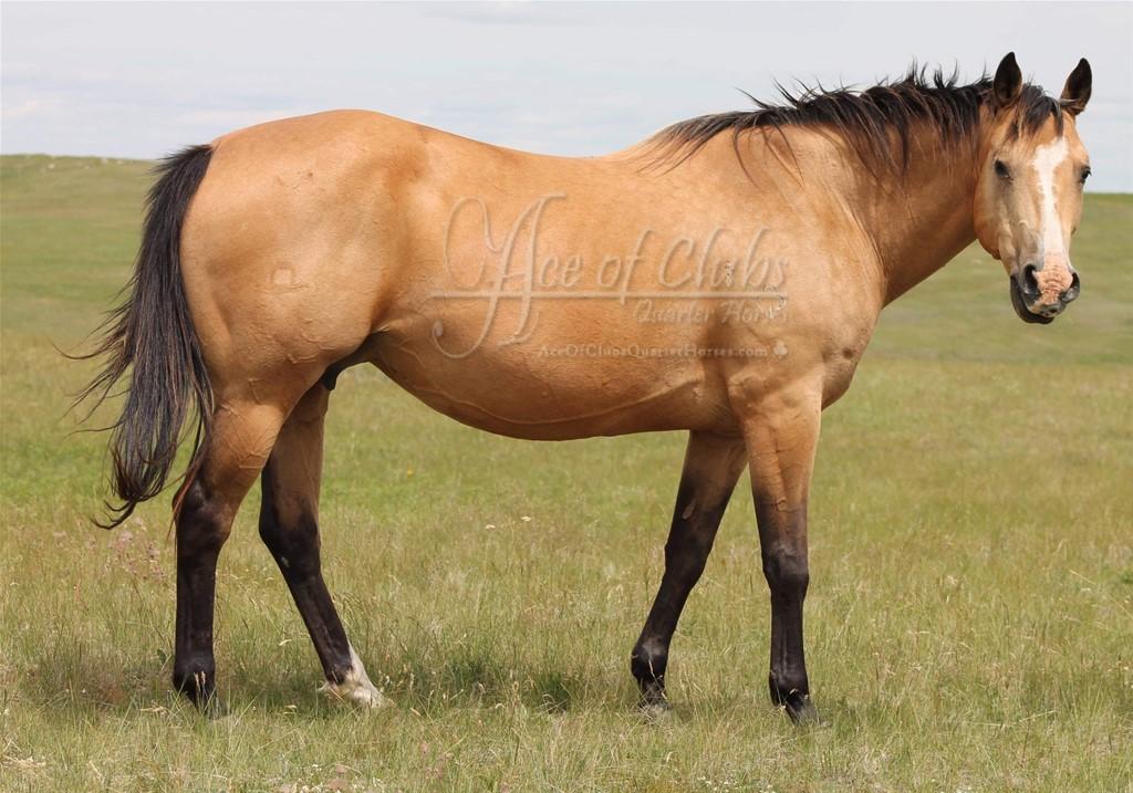 Saddle Up N Rein