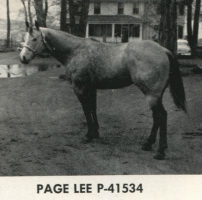 Page Lee