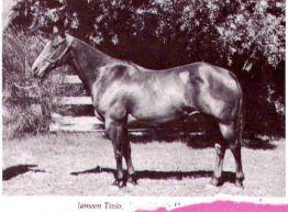 Jameen Tivio