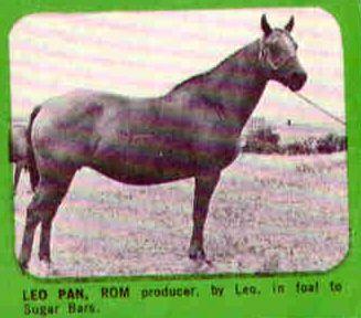Leo Pan