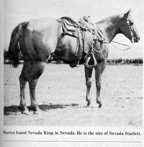 Nevada King