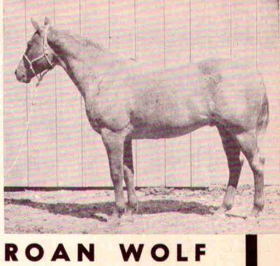 Roan Wolf