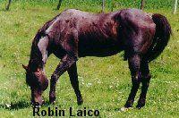 Robin Laico