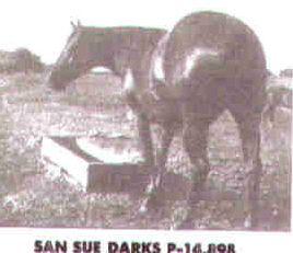 San Sue Darks
