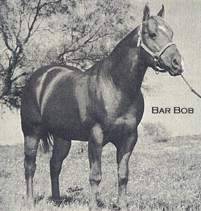 Bar Bob