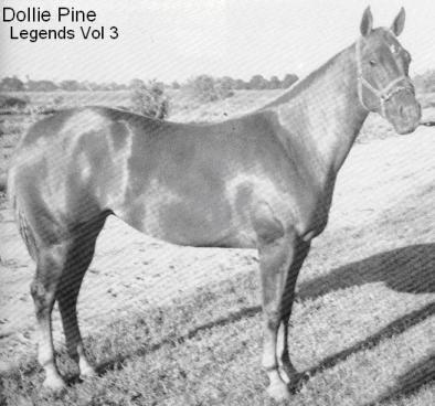 Dollie Pine