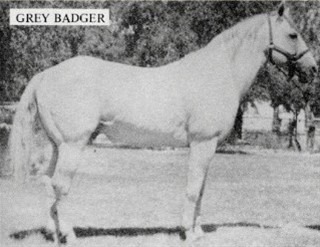 Grey Badger III
