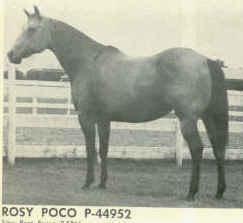 Rosy Poco