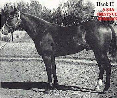 Hank H