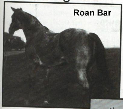 Roan Bar