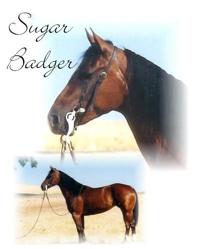 Sugar Badger