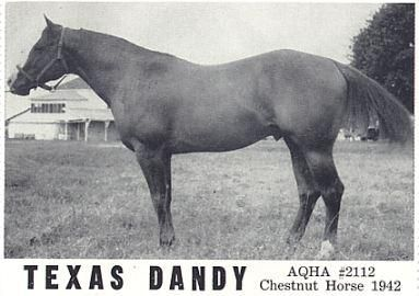 Texas Dandy