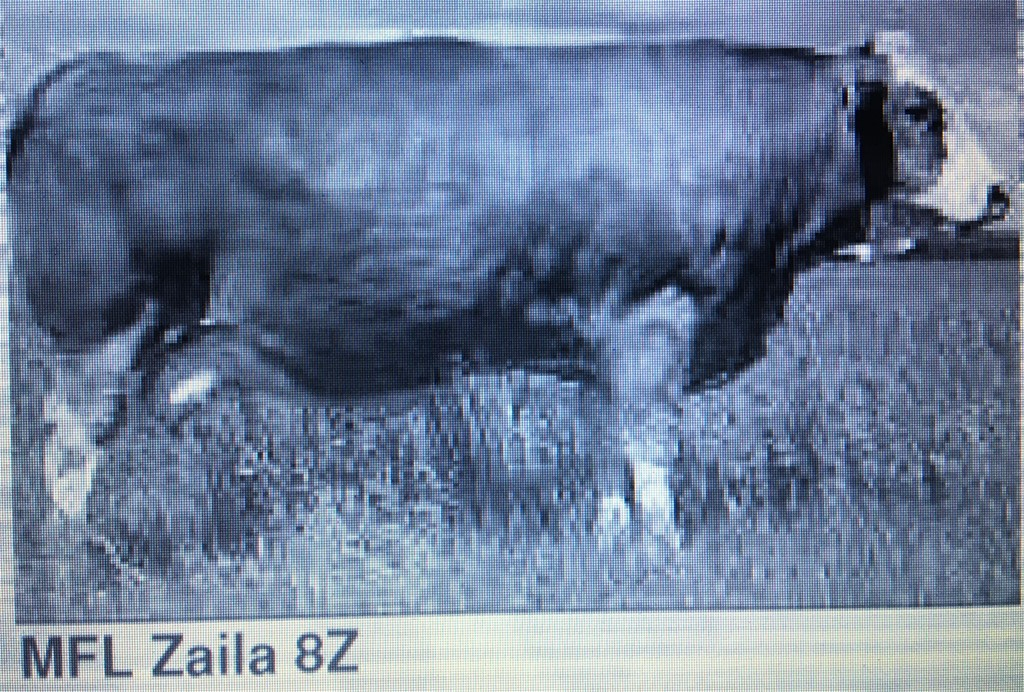 MFL Zaila 8Z