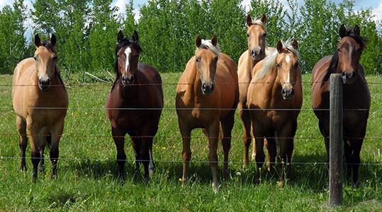 Some prospects - Ace of Clubs Quarter Horses
